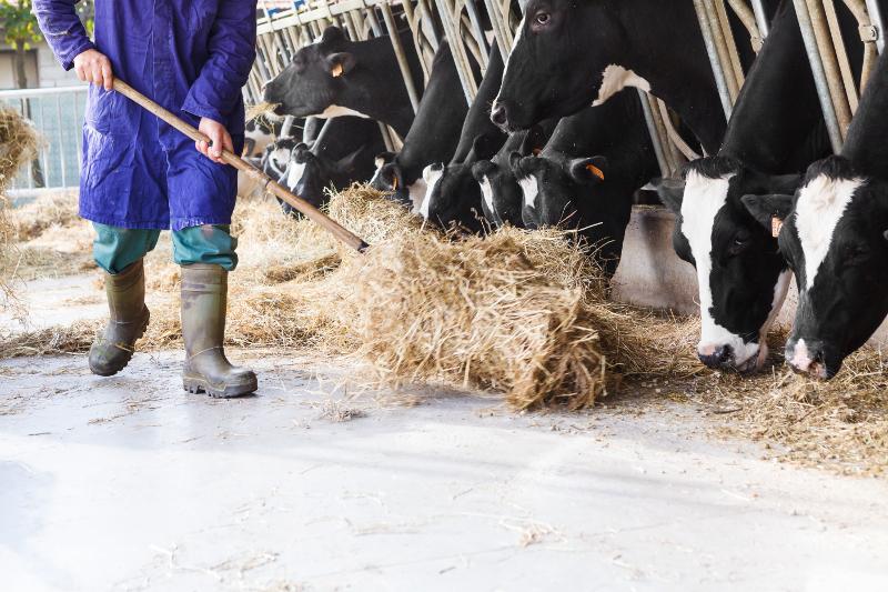Landwirtschaft: PsycheschBelaaschtung hëlt zou…